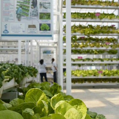Fazendas verticais são solução e inspiração para os dias de hoje