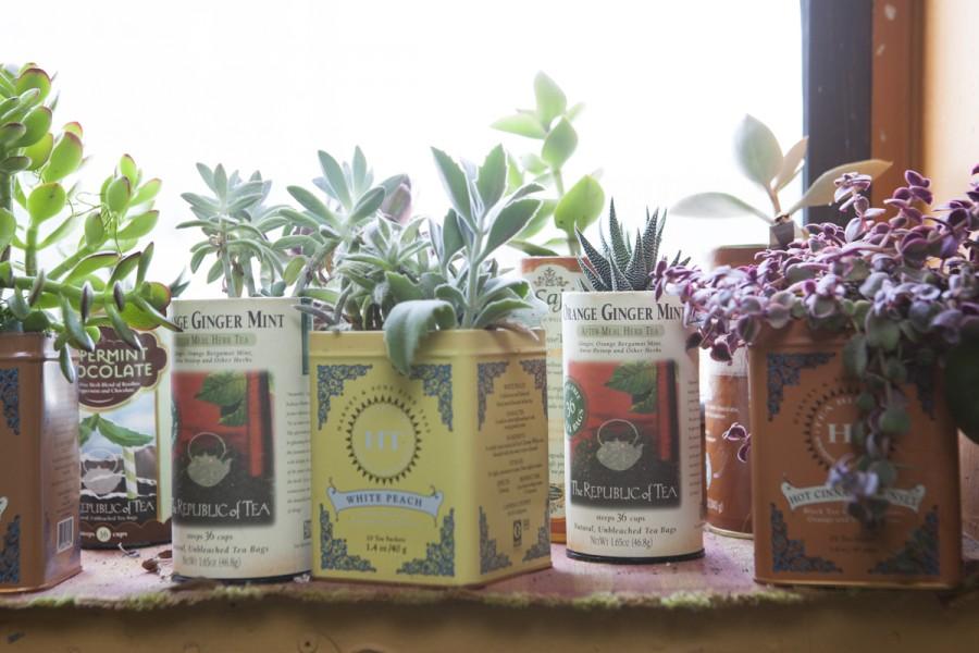 Um tempinho dedicado às plantas pra uma vida cheia de verde