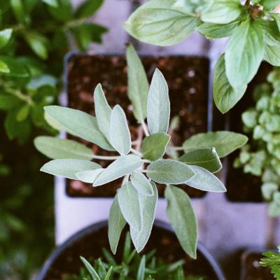 Horta em casa: para desestressar, inspirar e cozinhar
